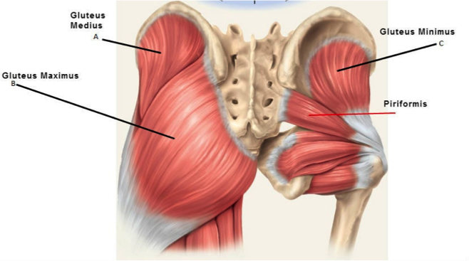 Gluteal Tendinopathy – Exercise & Education? Corticosteroid injection? Wait and see? Which Option is Best
